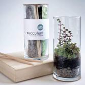 Vertical Succulent Terrarium Grow Kit