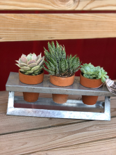 Succulent Windowsill Planter Plant