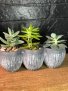 Succulent X3