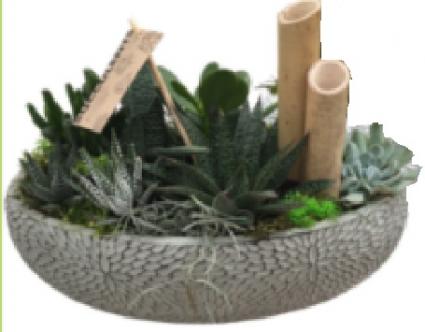 Succulent XL