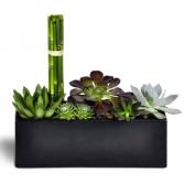 Succulent Zen Oasis modern