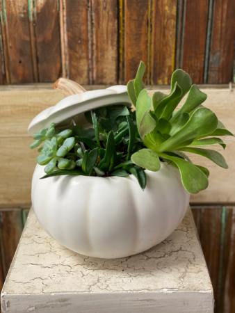 Succulents and Pumpkins
