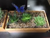 Succulents Arrangement  plants