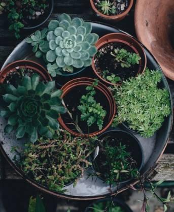 Designer's Choice Succulent Garden Plants & Terrariums