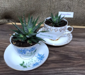 Succulents In assorted antique tea cup and saucer