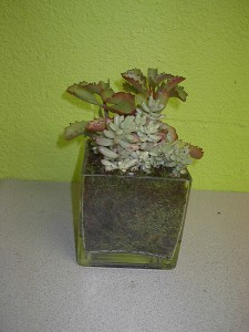 Succulents in moss and clear vase Las Vegas Plants