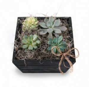 Succulents Mixed succulents in decorative wooden container in Draper, UT | Draper FlowerPros