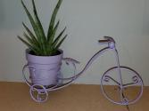 Succulents w/ bike  everyday gift