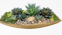 Sucuulent Planter Living Plant