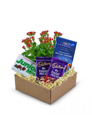 Boy Meets World Basket Gift Basket in Nevada, IA | Flower Bed