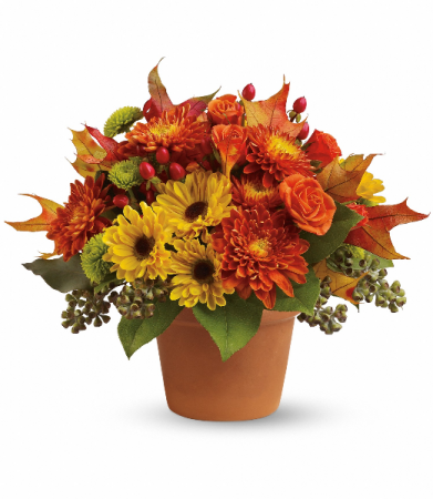 Sugar Maple fall arrangement