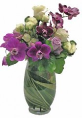 Sugar Plum Orchid Fairy Cut flowers