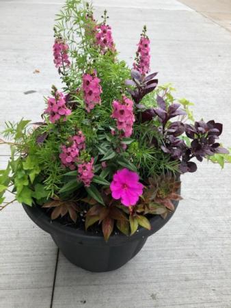 Summer Annual Patio Planter