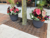 Summer Annual Patio Planters
