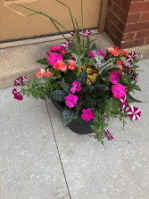 Summer Assorted Planter