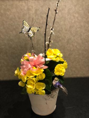 Summer Begonia Plant Single Begonia