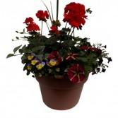Summer Bloomers Combo pot Combination Pot