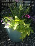 Summer Breeze Planter