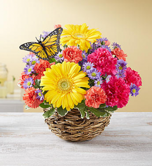 Summer Cheer™ in Bird's Nest  in Valley City, OH | HILL HAVEN FLORIST & GREENHOUSE