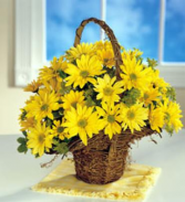 Summer Daisy Basket Arrangement