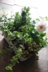 Summer Dish Garden