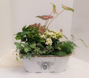Summer Dishgarden  in Tottenham, ON | TOTTENHAM FLOWERS & GIFTS