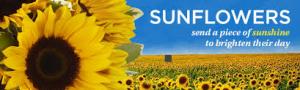 SUMMER IS HERE! SEND SOME SUNSHINE!!  in Margate, FL   THE FLOWER SHOP OF MARGATE