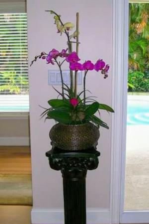 3 Orchids Arrangement