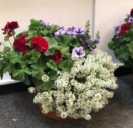 Summer Porch Pots Plant