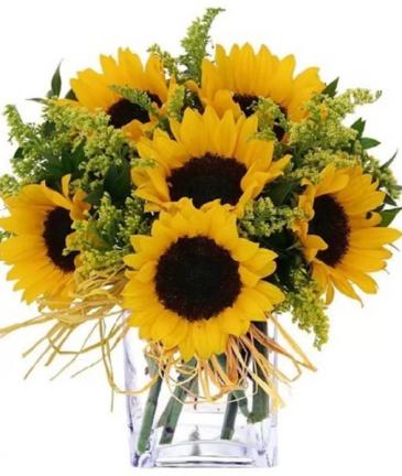 Sun Flower BQT