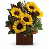 Sun Flower Days  Fresh Flowers in Wooden Keepsake Box