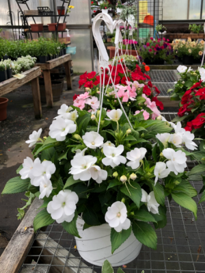 SUN Patient Hanging Basket Teacher &  Administrator Appreciation in Lewiston, ME | BLAIS FLOWERS & GARDEN CENTER