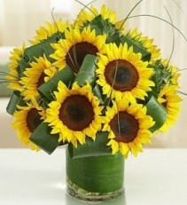 Sun-Sational Sunflowers EF42