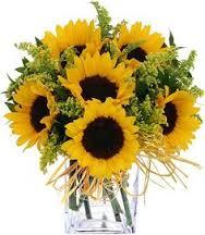 Sunflower Fun  in Dover, NH   SWEET MEADOWS FLOWER SHOP