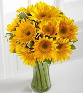 Sunflower Galore Spring