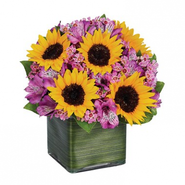 Sunflower Melody Arrangement