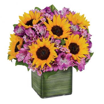 Sunflower Melody Summery