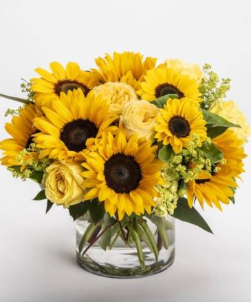 Sunflower Ransom!