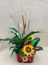 Sunflower Serenade Dish Garden Planter