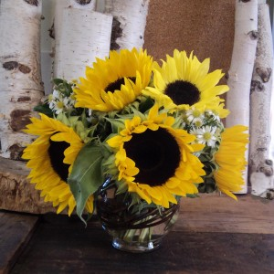 Sunflower Song Vase Arrangement in North Adams, MA | MOUNT WILLIAMS GREENHOUSES INC