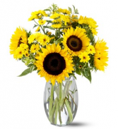 Sunflower Splash - 011 Vase Arrangement