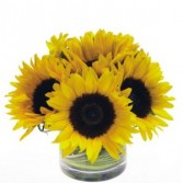 Sunflower Sunshine cylinder arr
