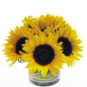 Sunflower Sunshine cylinder arr in Fairfield, CT | Blossoms at Dailey's Flower Shop