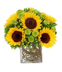 Sunflower Surprise cube vase arrangement