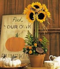 Sunflower Topiary Fresh Sunflowers