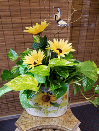 Sunflowers and pothos