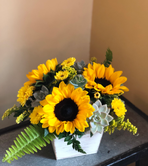 Sunny blooms and  succlents Arrangement in Pawling, NY | PARRINO'S FLORIST