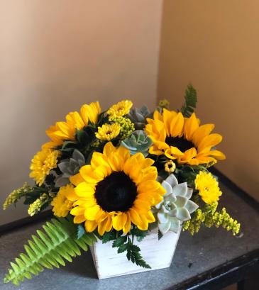 Sunny blooms and  succlents Arrangement