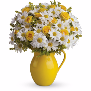Sunny Day Pitcher of Daisies Bouquet by Teleflora in Port Moody, BC | MAPLE FLORIST