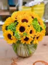 Sunny daytime  Sunflower